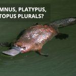 Q&A: Alumnus, platypus, octopus plurals?