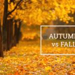 Q&A: Autumn vs fall
